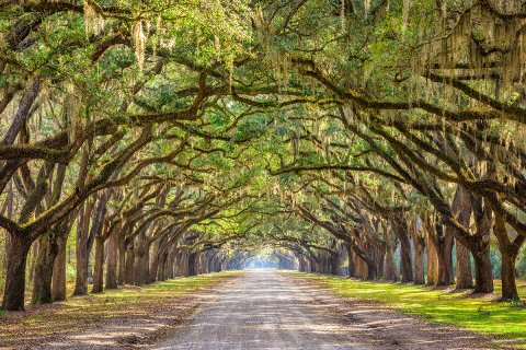 CUL_Map_Travel_Savannah