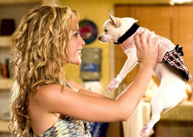 #94. Beverly Hills Chihuahua (2008)