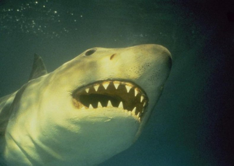 #81. Jaws 3-D (1983)