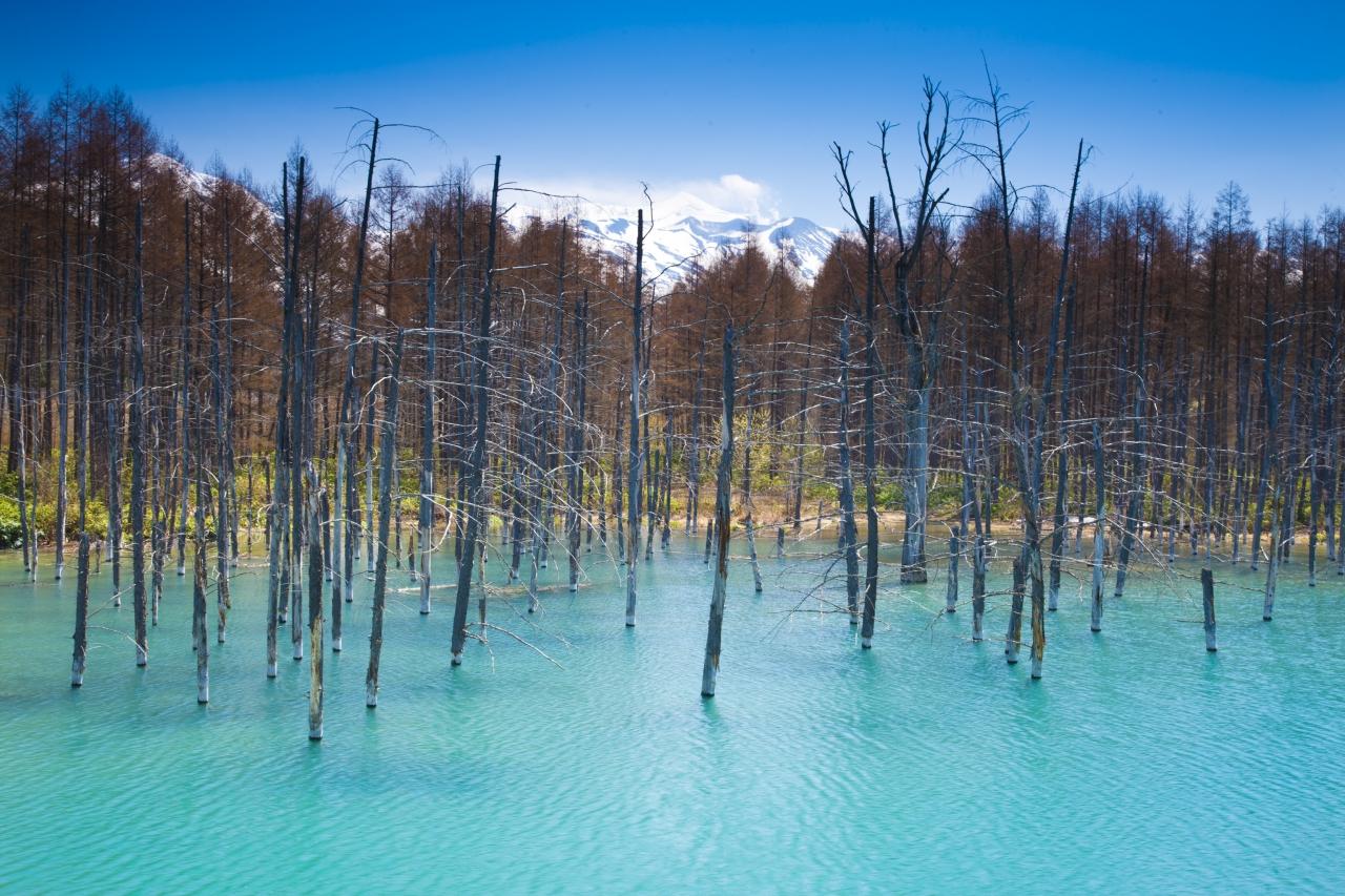 Hokkaido forest pic