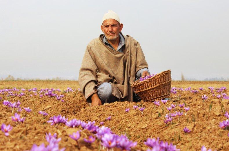 Elderly man collecting flowers