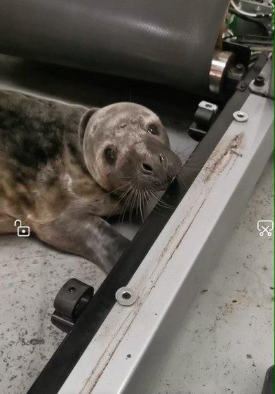 seal, rspca, llanelli, gym, wales,