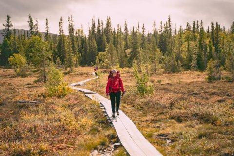 Rewilding in Sweden