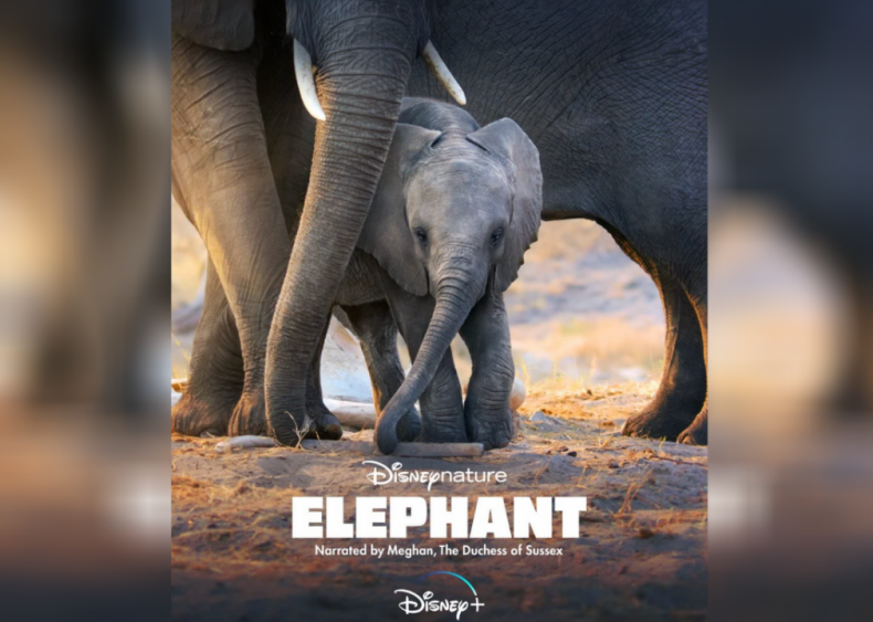#46. Elephant
