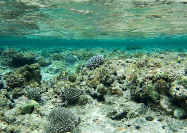 April 7: The Great Barrier Reef experiences a bleaching event