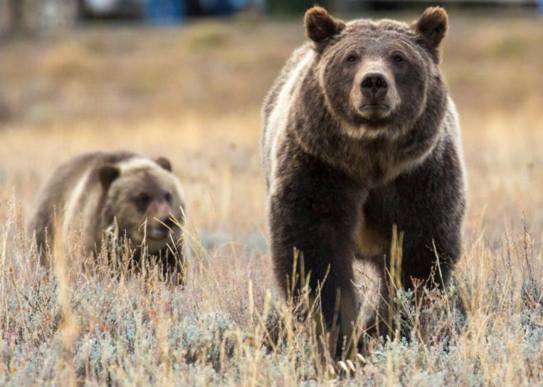 August 9: The Endangered Species Act is weakened