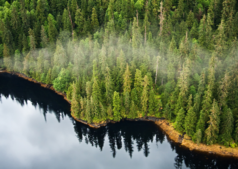 October 28: Trump ends Tongass National Forest protections