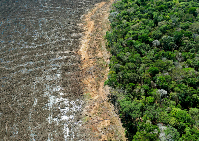 November 30: Amazon deforestation hits 12-year high