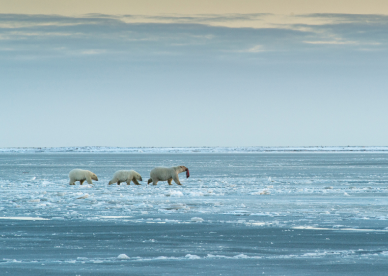 November 31: Every major bank opts out of Arctic drilling