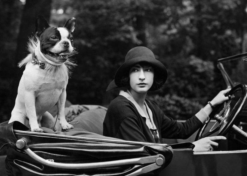 Vintage photos of America's most popular dog breeds