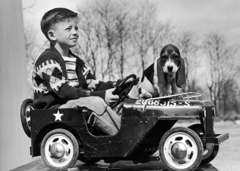 #37. Basset hound