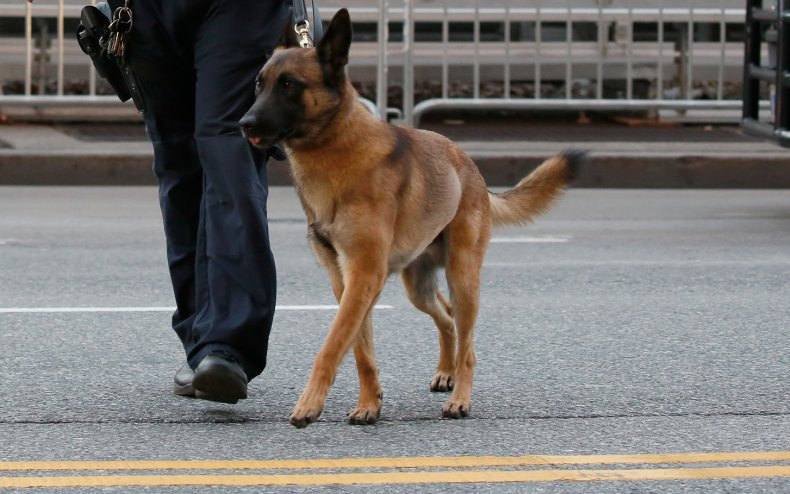 A police dog in New York