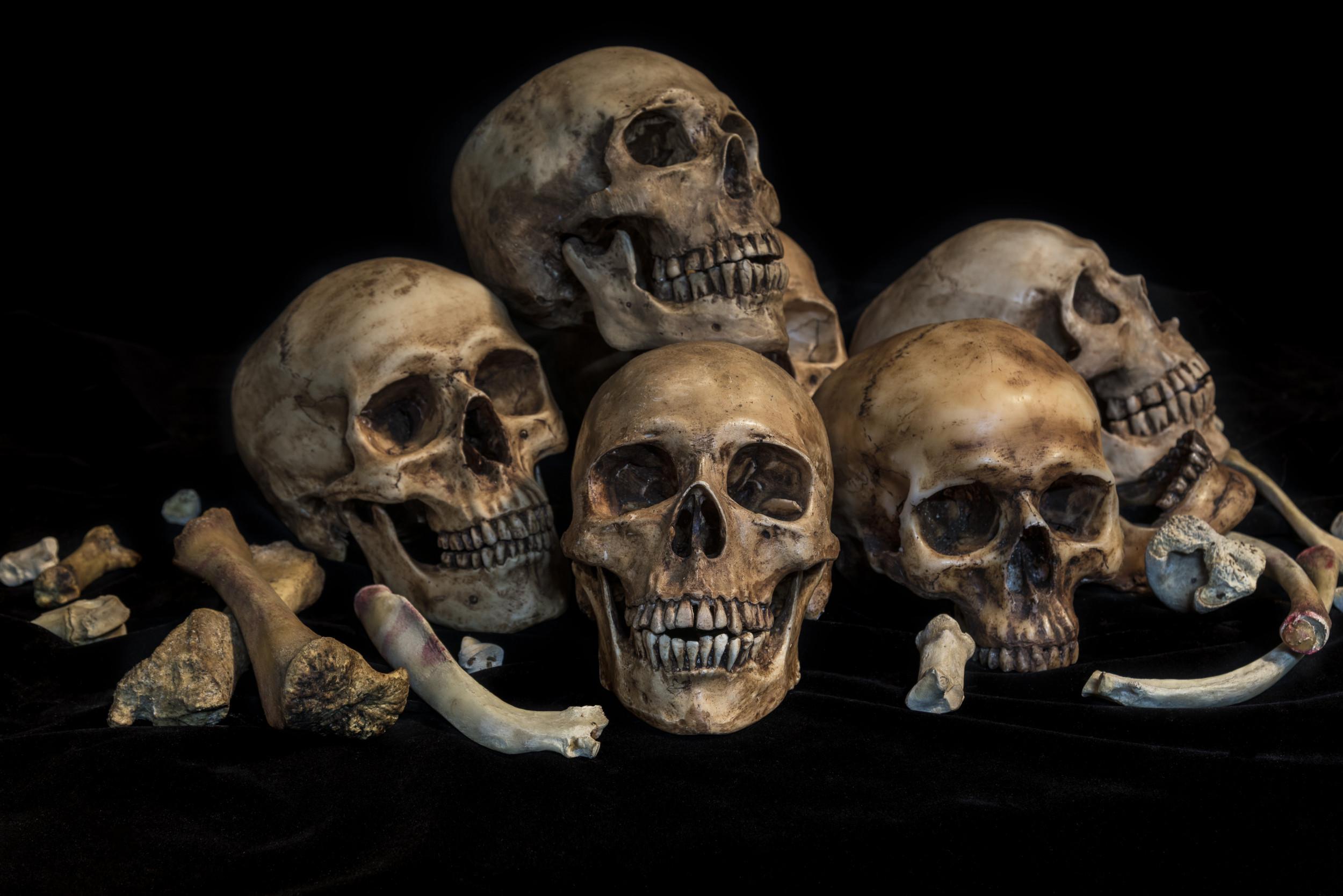 Florida Men Arrested for Stealing Veteran's Skulls from Graves for Religious Shrine thumbnail