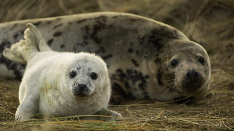 horsey bay seals, Sara Jenner Photography