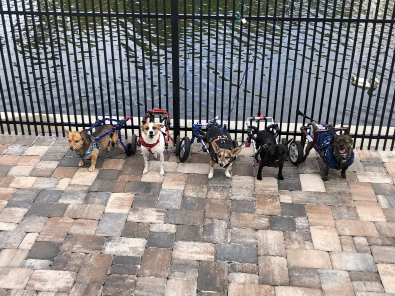 Dogs, special needs, rescue, rescue dogs
