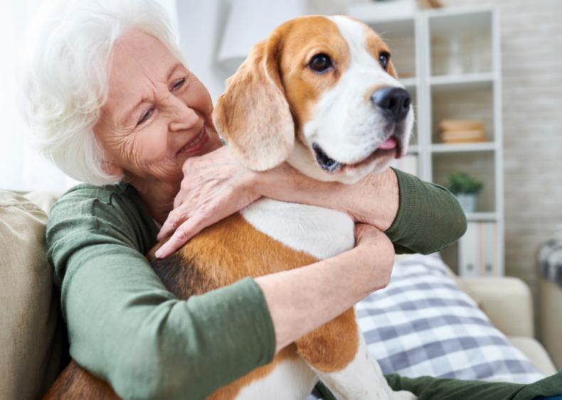 Great dog breeds for seniors