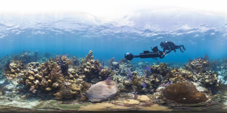 Chasing Coral Still from Netflix Documentary