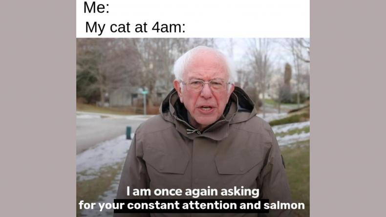 Sanders 4
