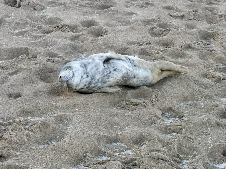 Seal rescue ireland, atria,