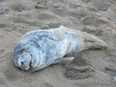 seal rescue ireland atria