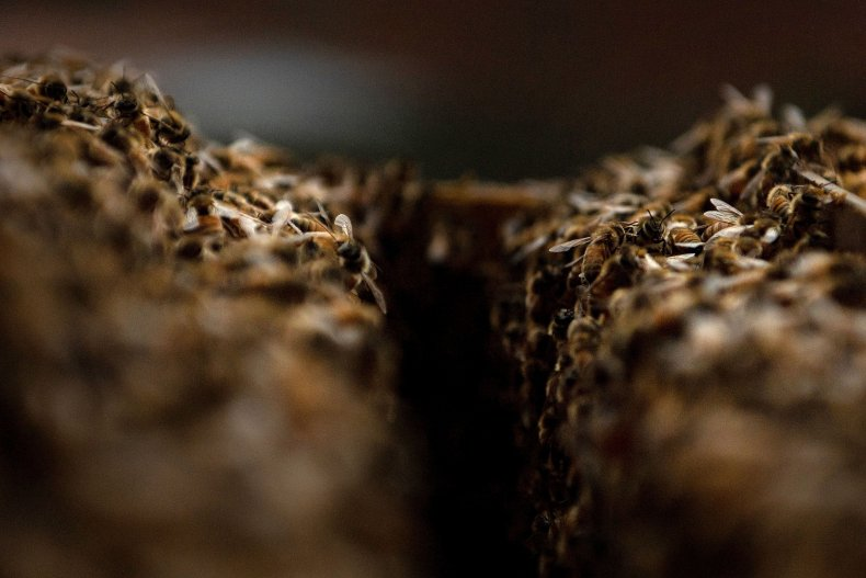 Stock image inside a bee hive