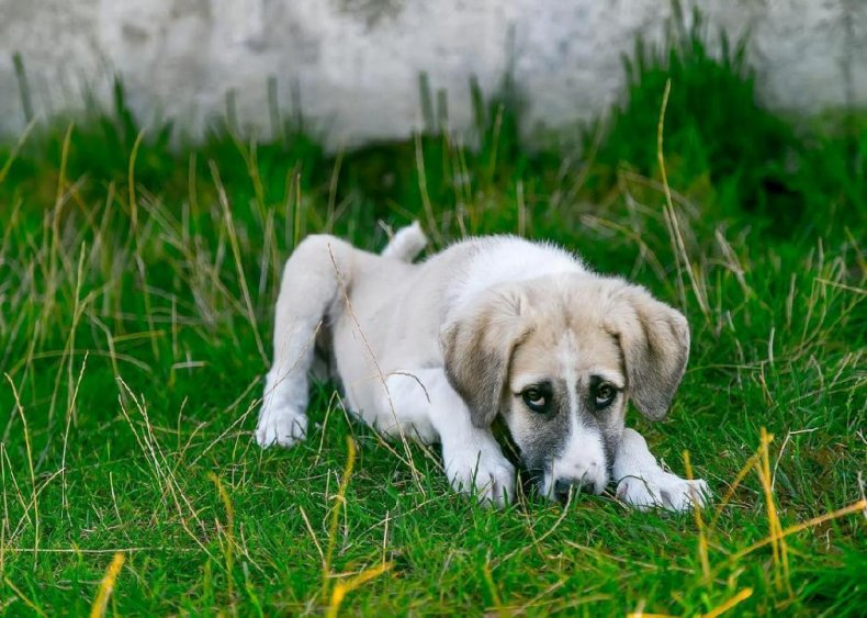 30 foods that are poisonous to dogs