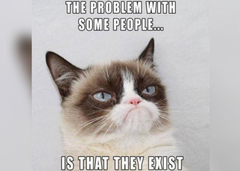 2012: Grumpy Cat