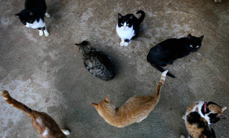 Nebraska Fire Cats Killed