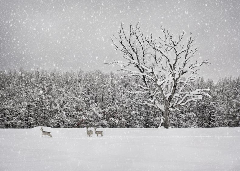 1927: Record snowfall in Raleigh, North Carolina