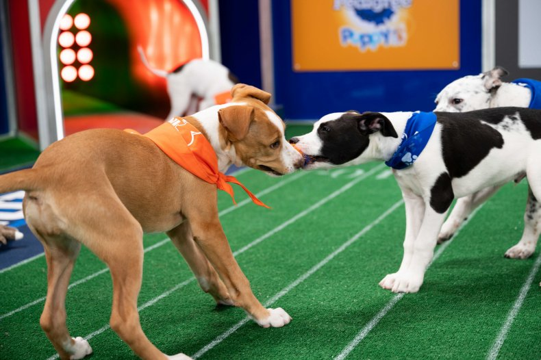 What Happens To 'Puppy Bowl' Animals'