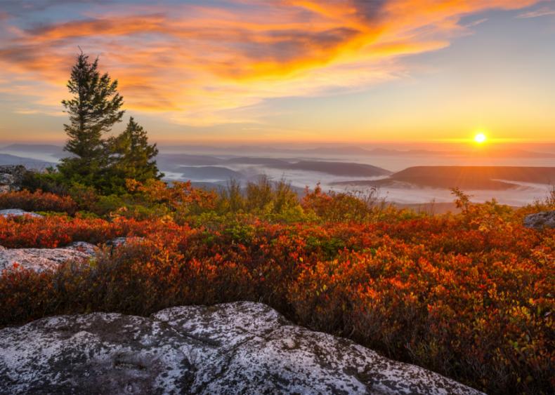 #51. West Virginia