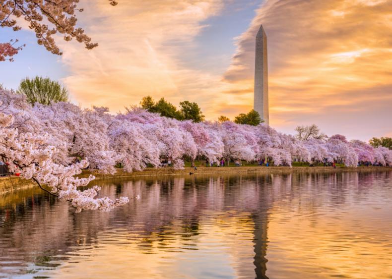 #31. Washington D.C.