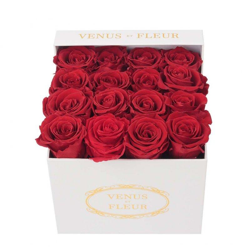 Valentine's Day Roses Venus et Fleur