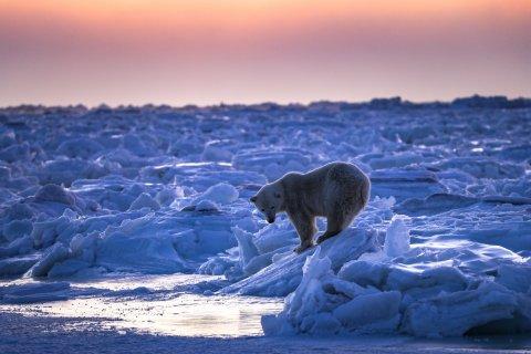 CUL_Map_Cold_Polar Bears - Manitoba