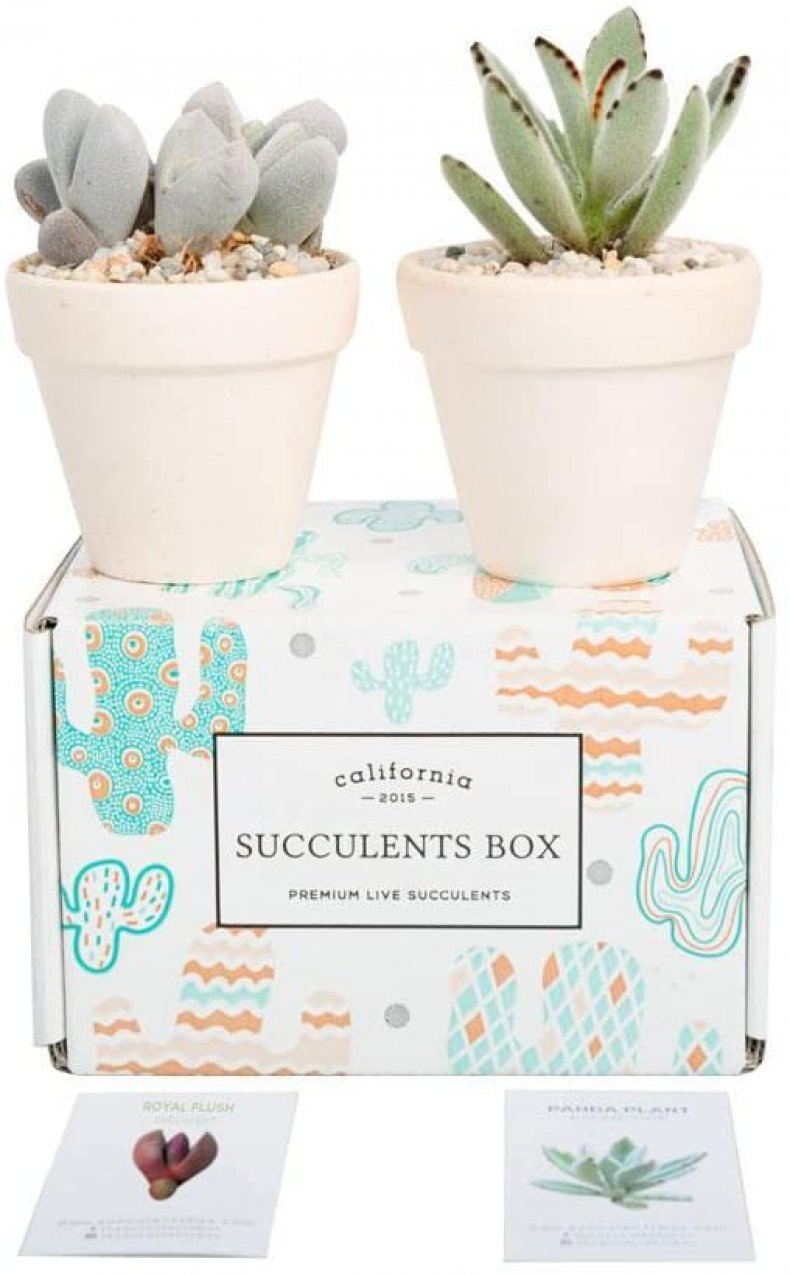 best last minute valentines day gifts succulents