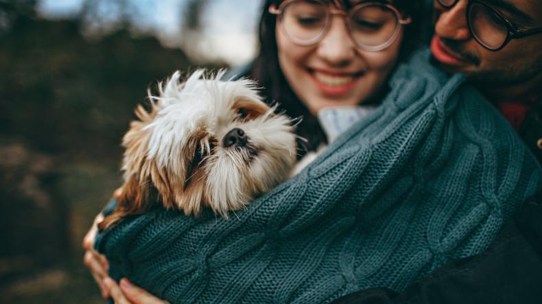 Comfort your dog
