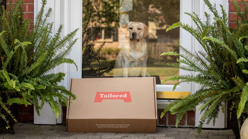 Tailored For Your Pet 13