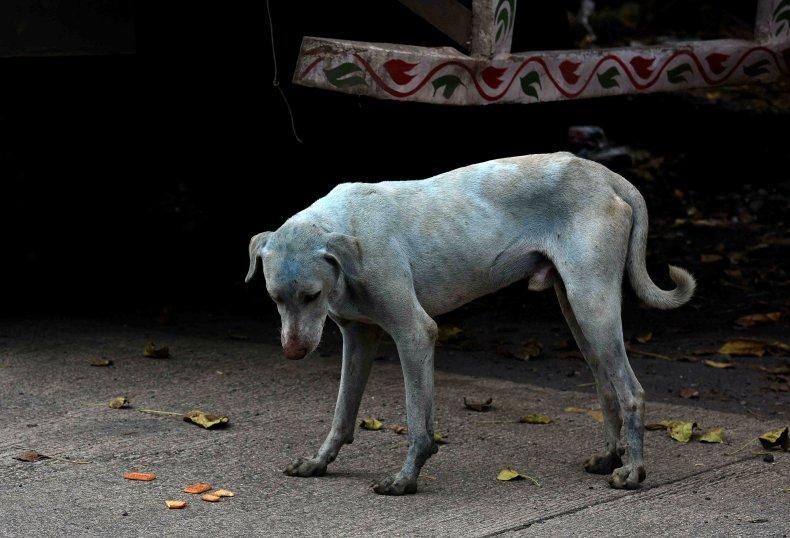 Blue dog in Mumbai, illustrative image
