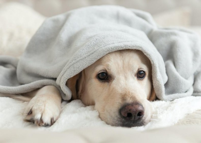 How to prevent parasites, parvovirus, and other common illnesses affecting dogs