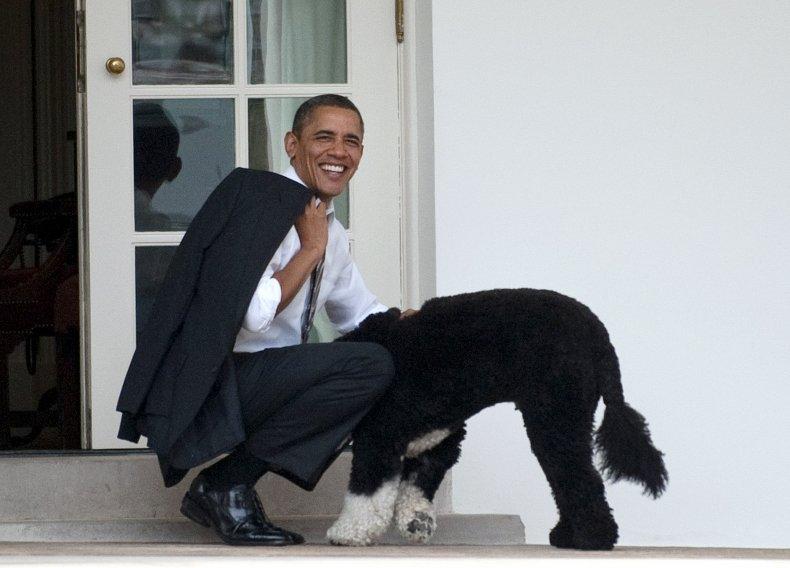 Barack Obama Bo