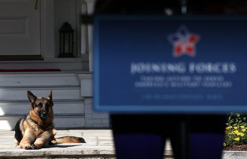 President Joe Biden's Dog, Champ, Lays Down