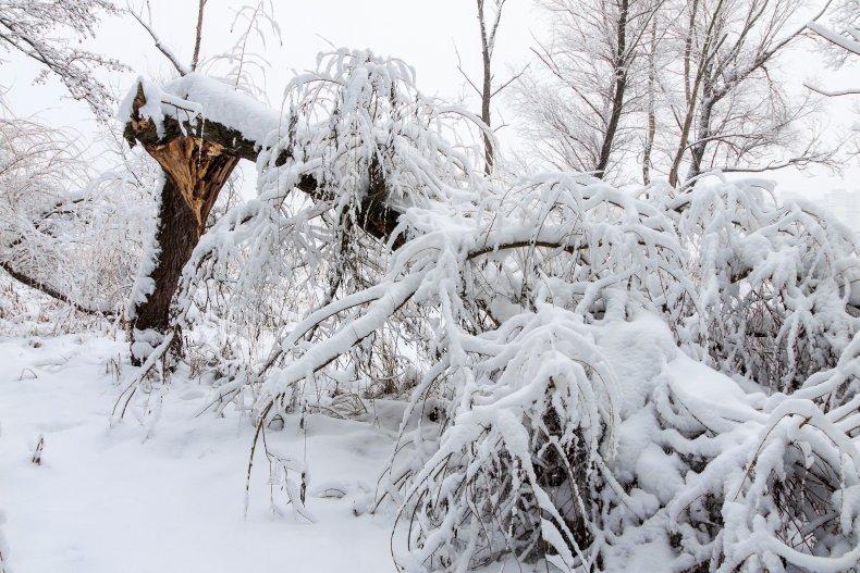 Broken tree in the snow