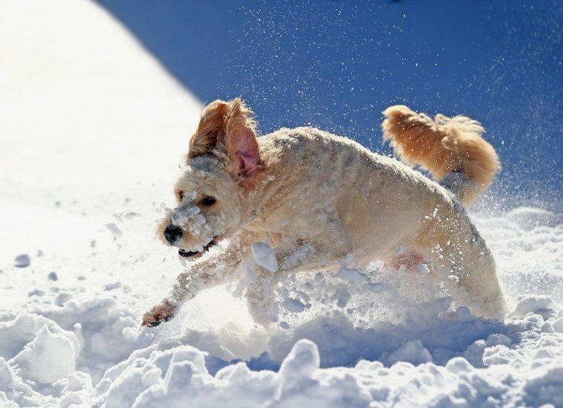 Dog Stuck in Frozen Pond Owner