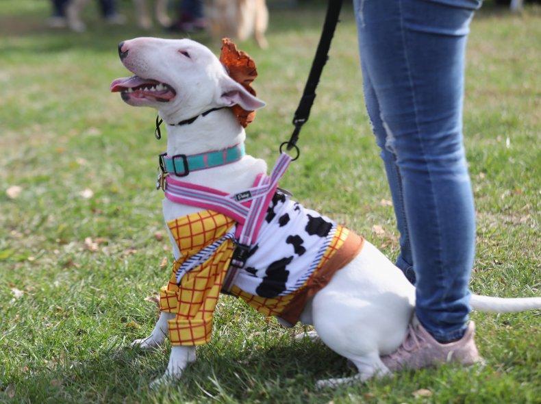 Bull terrier NYC