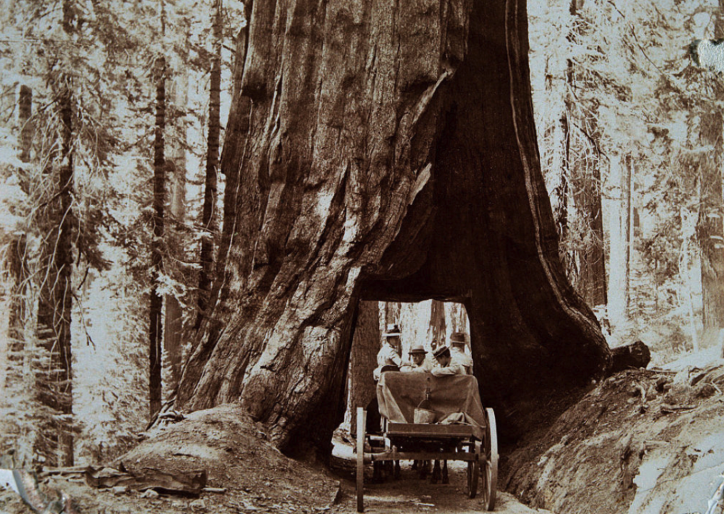 50 vintage photos that show the beauty of America's national parks