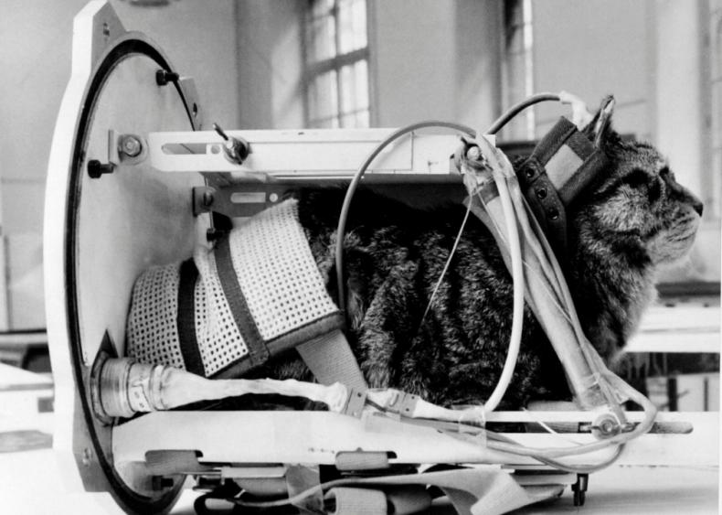 1963: First cat in space
