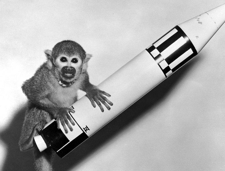 1948 Monkey