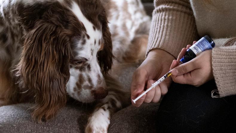 ellevet science cbd for dogs