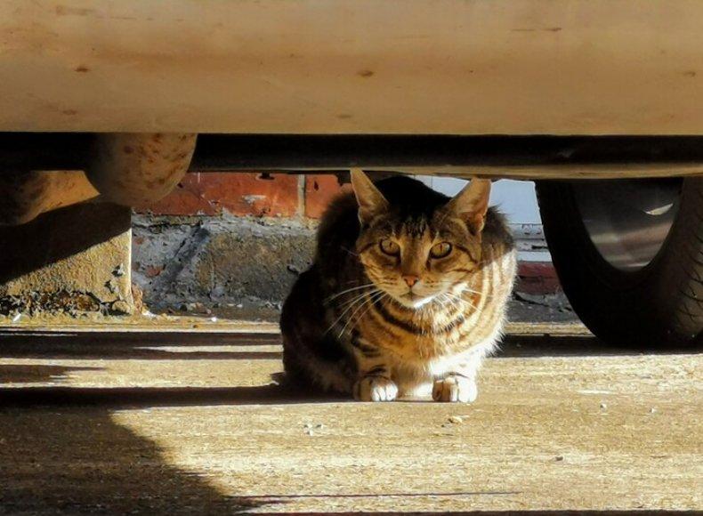 Stock: Cat hiding under car