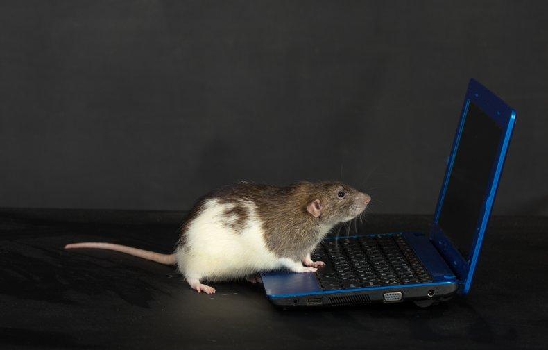 Rat computer